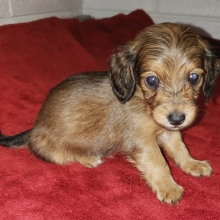 Puppies sold in South Carolina | PuppySpot